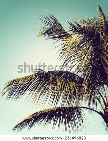 Closeup of a palm tree against clear blue sky with instagram-style filter added for vintage effect. - stock photo