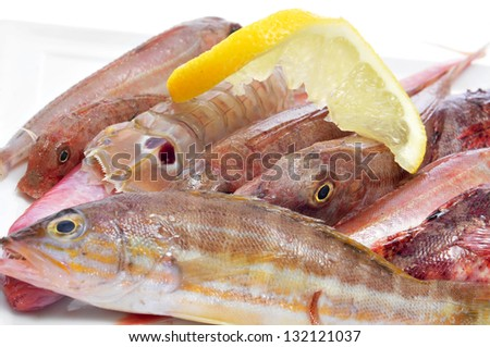 closeup of a pile of different raw fishes from the mediterranean sea on a white background - stock photo
