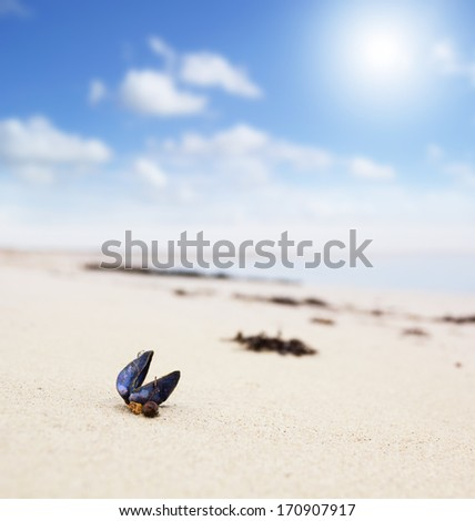 Closeup of a seashell on a sunny beach. Small depth of field with focus on the blue shell - stock photo