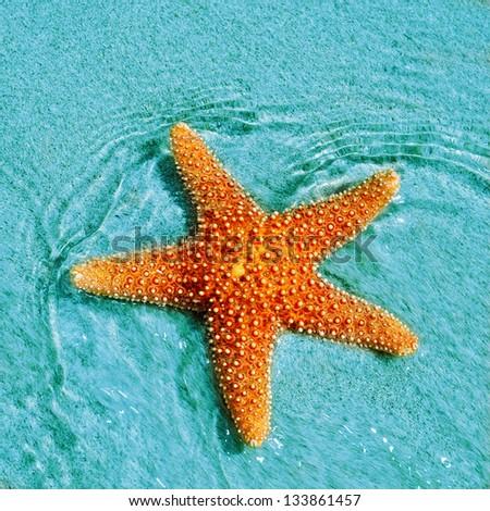 Seastar Stock Photos, ...