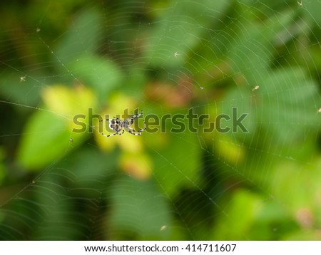 Closeup of a Spider on Woodland Plants on the Forest Floor - stock photo