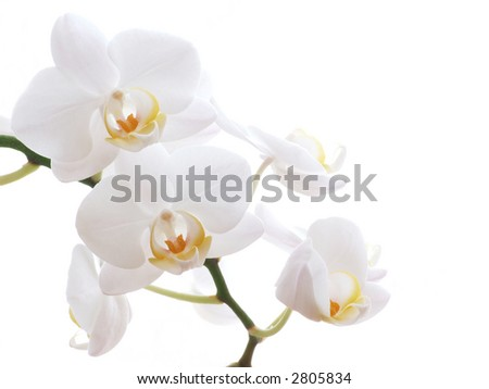 Closeup of a white orchid - isolated on white - stock photo