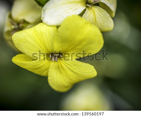 Closeup of A Yellow Flower With Green Bokeh Background - stock photo