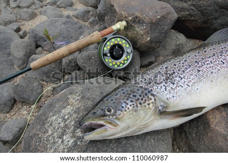 closeup of an atlantic salmon and a fly fishing rod - stock photo
