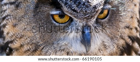 closeup of an Eurasian eagle owl - stock photo