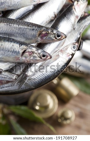 Closeup of anchovies weighing  on scale - stock photo