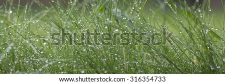 Closeup of beautiful fresh thick lush green young grass with many crystal morning dew outdoor on natural background copyspace, horizontal picture - stock photo