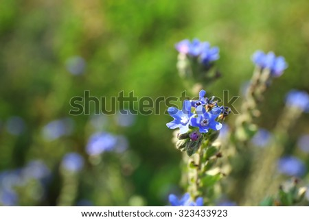 Closeup of beautiful wildflowers - stock photo