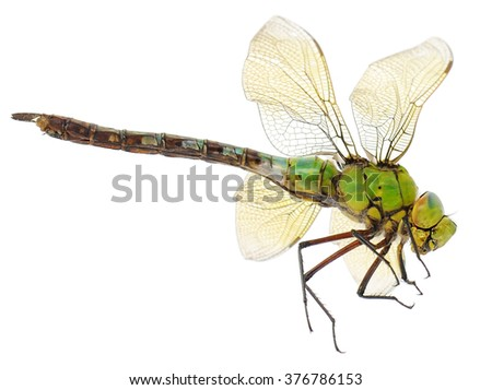 closeup of big green dragonfly over white - stock photo