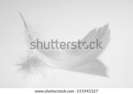 Closeup of birds feather. - stock photo