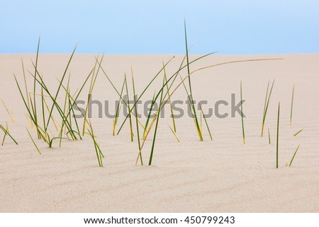 Closeup of blades of grass in sand dune - stock photo