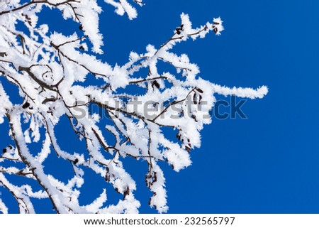 Closeup of branches of a tree, covered with rime frost against a blue sky - stock photo