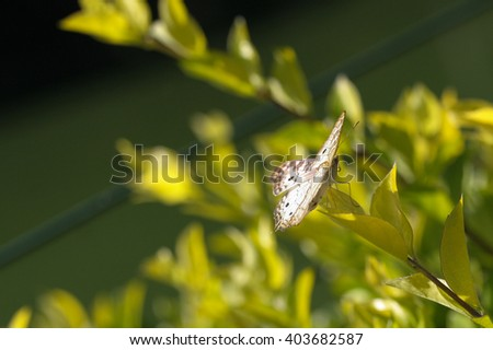 Closeup of brown butterfly with spread wings sitting on green plants - stock photo