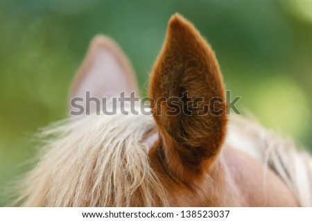 Closeup of Brown horse's ear - stock photo