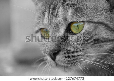 Closeup of cat face with green eyes. - stock photo