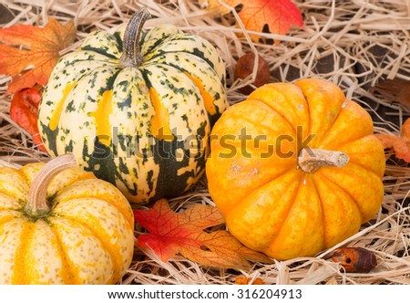 Closeup of colorful autumn squash on straw - stock photo