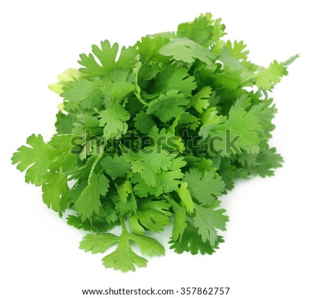 Closeup of coriander leaves over white background - stock photo