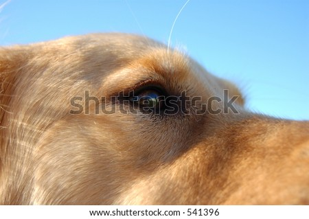 Closeup of dog's eye. - stock photo