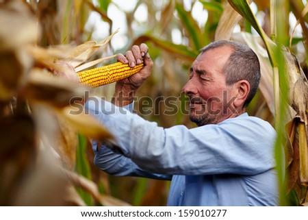 Closeup of farmer at corn harvest - stock photo