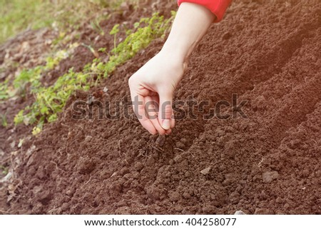 Closeup of female hand planting a seed in a fertile soil. Conceptual of agriculture and growth. Farmer planting plants in the ground. The idea of cultivation - stock photo