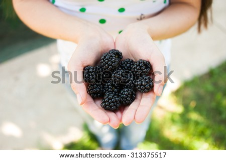 Closeup of female hands holding handful of blackberries outdoors in summer - stock photo