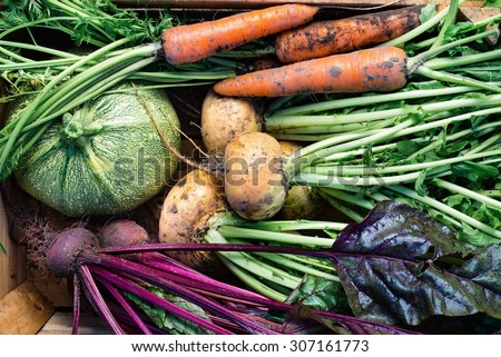 Closeup of freshly harvested vegetables (turnips, beetroots, carrots, round marrow), top view - stock photo