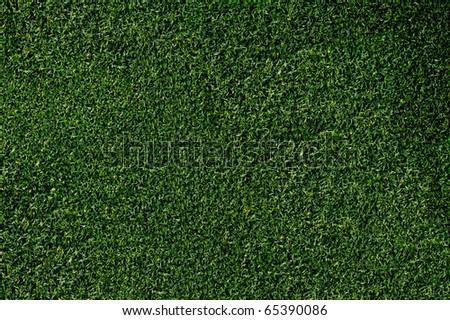 Closeup of grass on a putting green - stock photo
