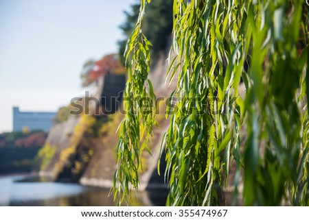 Closeup of green leaves plant in garden of Osaka castle park - stock photo