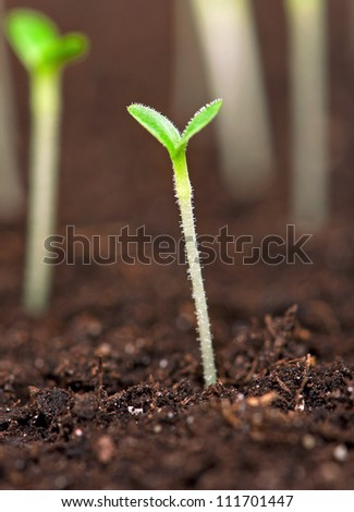 Closeup of green seedling growing out of soil - stock photo