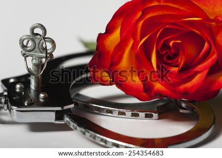 closeup of handcuffs with a rose  - stock photo
