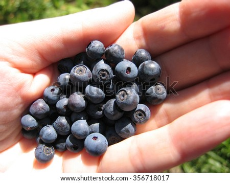 closeup of handful of fresh blueberries  - stock photo