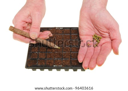 Closeup of hands planting seeds into cells of a seed tray isolated against white - stock photo