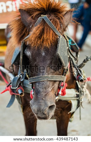 Closeup of horse face in out door - stock photo