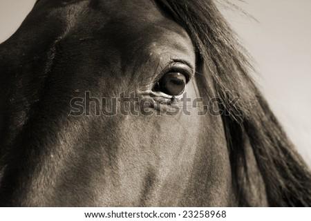 closeup of horses eye with mane - stock photo