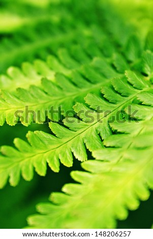 Closeup of lush green leaves of fern plant. - stock photo