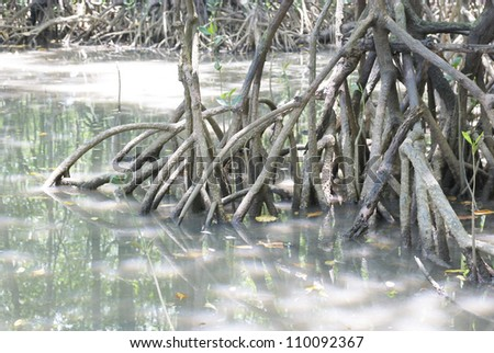 closeup of mangrove roots - stock photo
