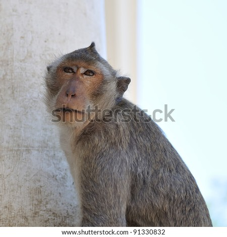 closeup of Monkey - stock photo
