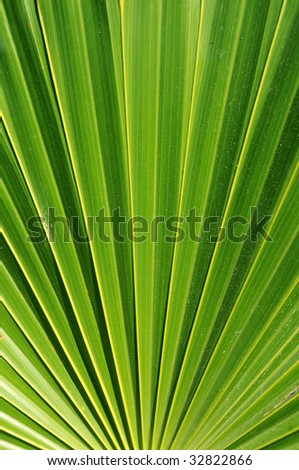 Closeup of palm leaf, with visual illusion of narrowing towards the top - stock photo