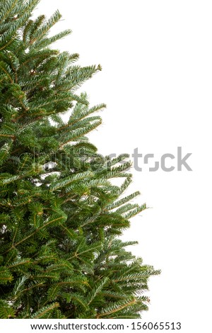 Closeup of part of a real evergreen Christmas tree with no decorations isolated on white background - stock photo