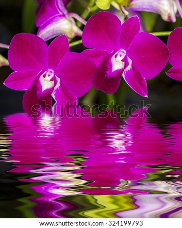 closeup of phalaenopsis orchid flower on water reflection - stock photo