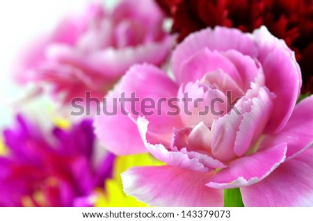 Closeup of Pink Carnation with other flower bouquet - stock photo