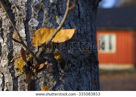 Closeup of single yellow leaf at tree trunk. Red house at background. Shallow DOF. - stock photo