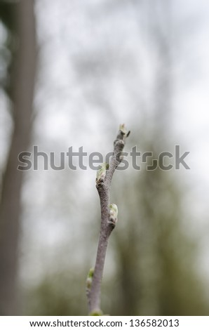 Closeup of small apple tree branch with first young gentle leaves and buds. Shallow dof. - stock photo