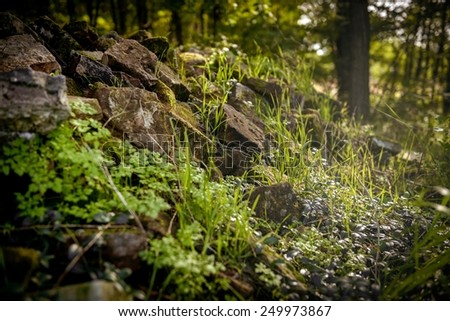 Closeup of some vegetation on stones at morning - stock photo