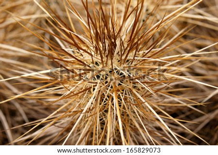 Closeup of spines on a hedgehog cactus - stock photo