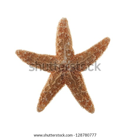 Closeup of Starfish Isolated on White Background - stock photo