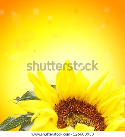 Closeup of sunflower on orange background - stock photo