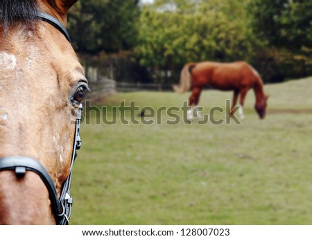 Closeup of the head of a brown horse in a horse ranch. - stock photo