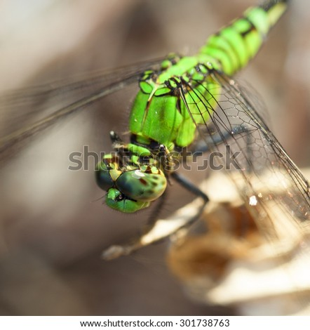 Closeup of the head of a green dragonfly - stock photo