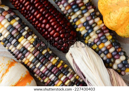 Closeup of three ears of Indian Corn and decorative gourds on a rustic wood table. - stock photo